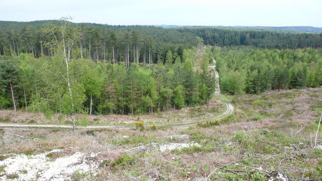 Roman Road, Puddletown Forest - geograph.org.uk - 786479