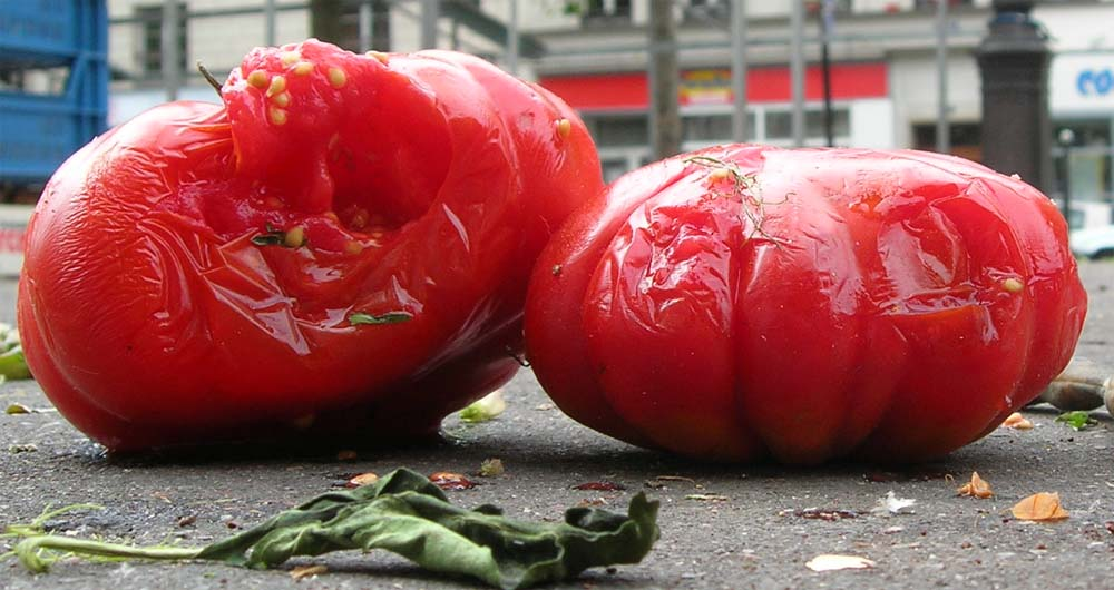 Are Tomatoes Good For Dogs