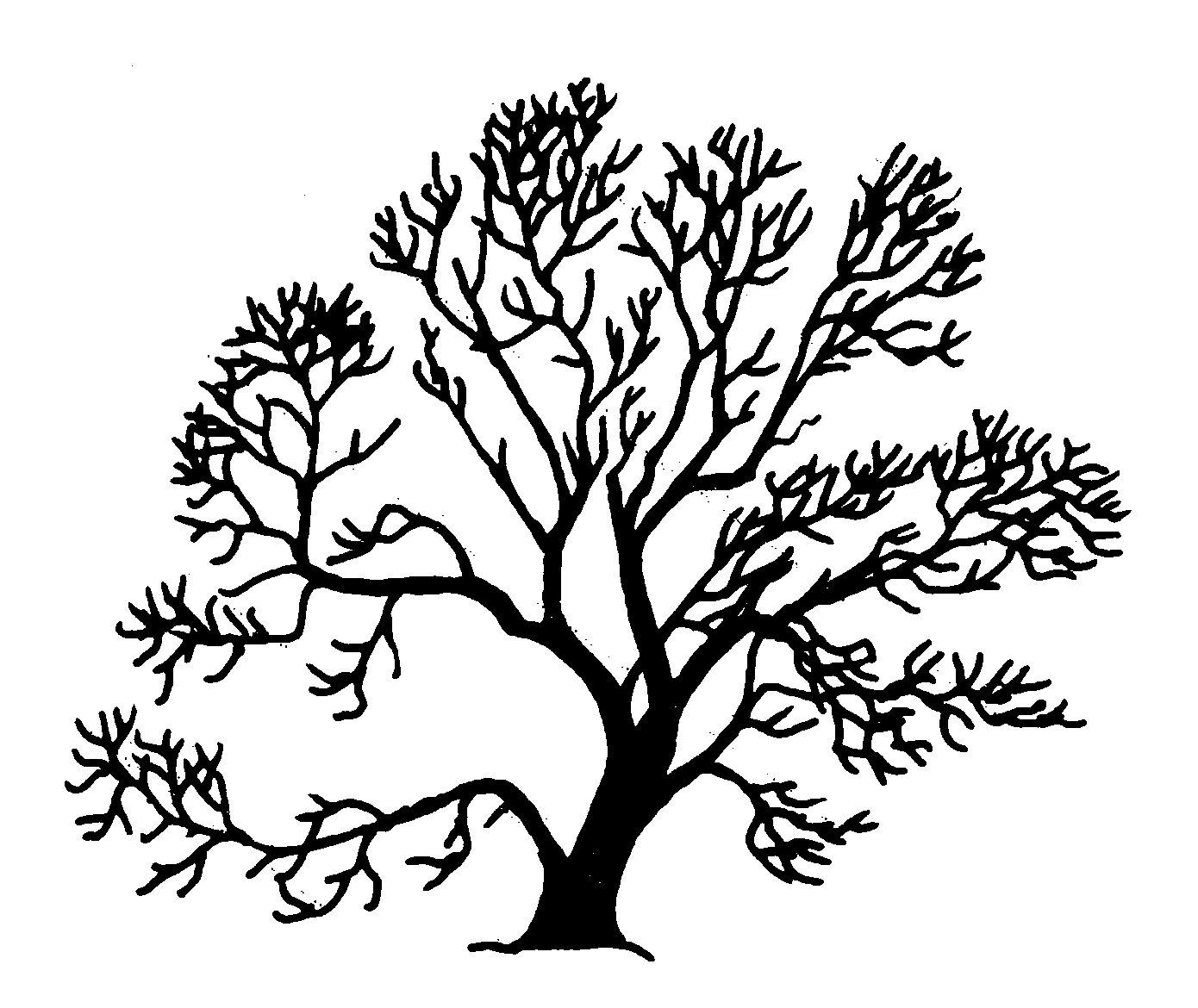 Salix fragilis Silhouette (oddsock).png