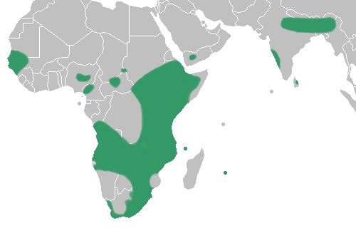 Satyrium - range map