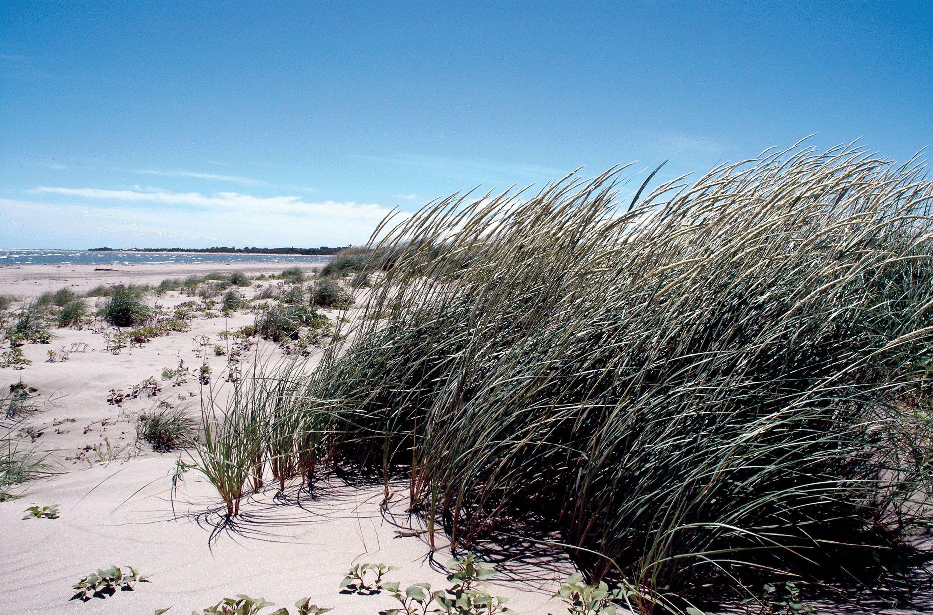 Spiaggia Porto Caleri - Primo Maggio sul Delta del Po