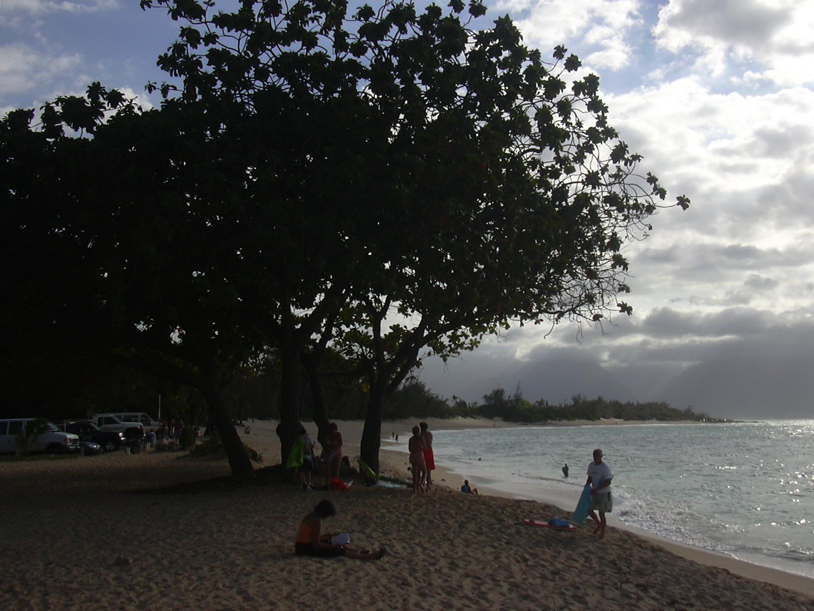 File:Starr-040805-0013-Terminalia catappa-habit-Baldwin Beach-Maui (24347792269).jpg