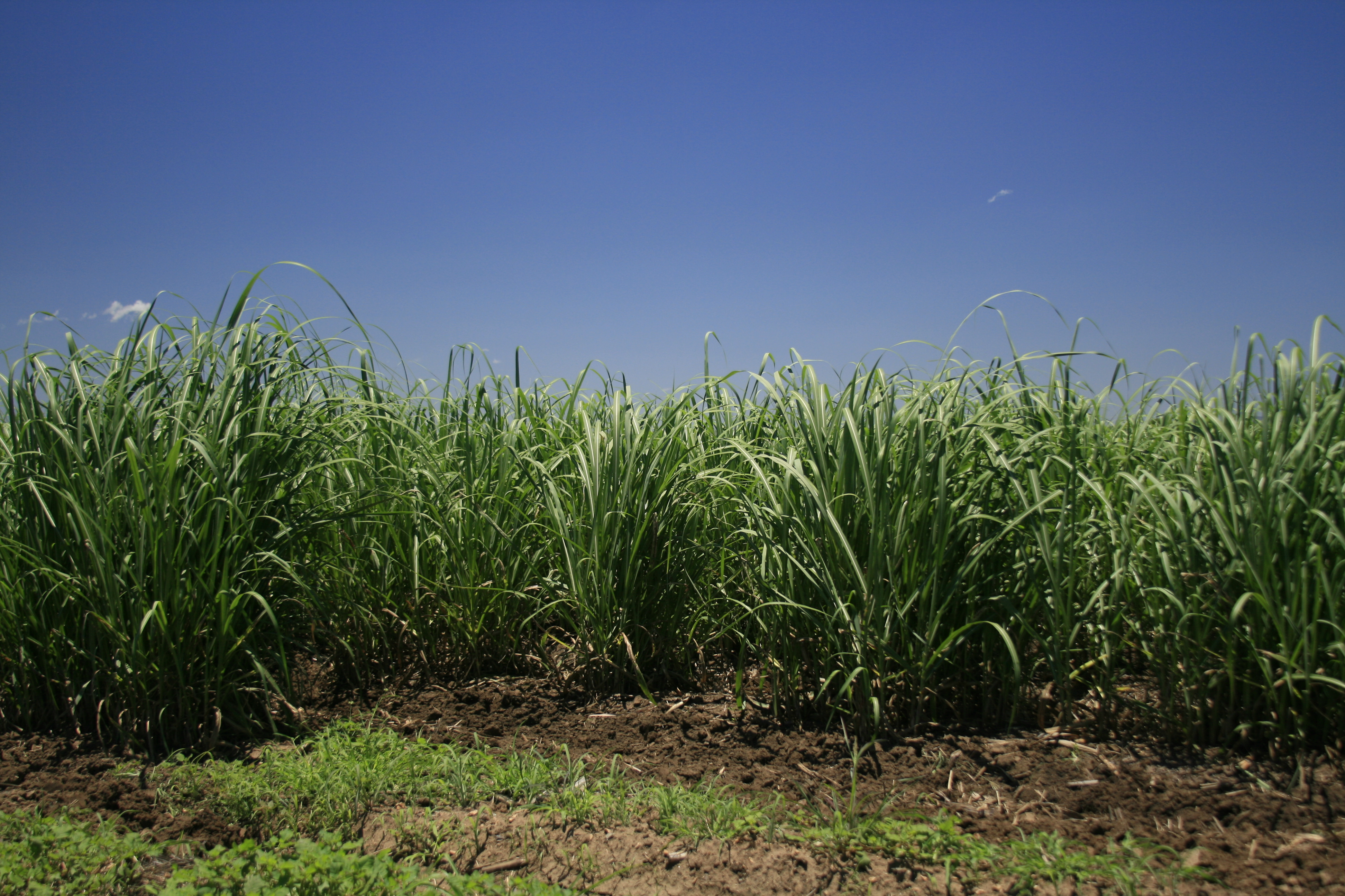 Sugarcane Is A Natural Resource In Which Country