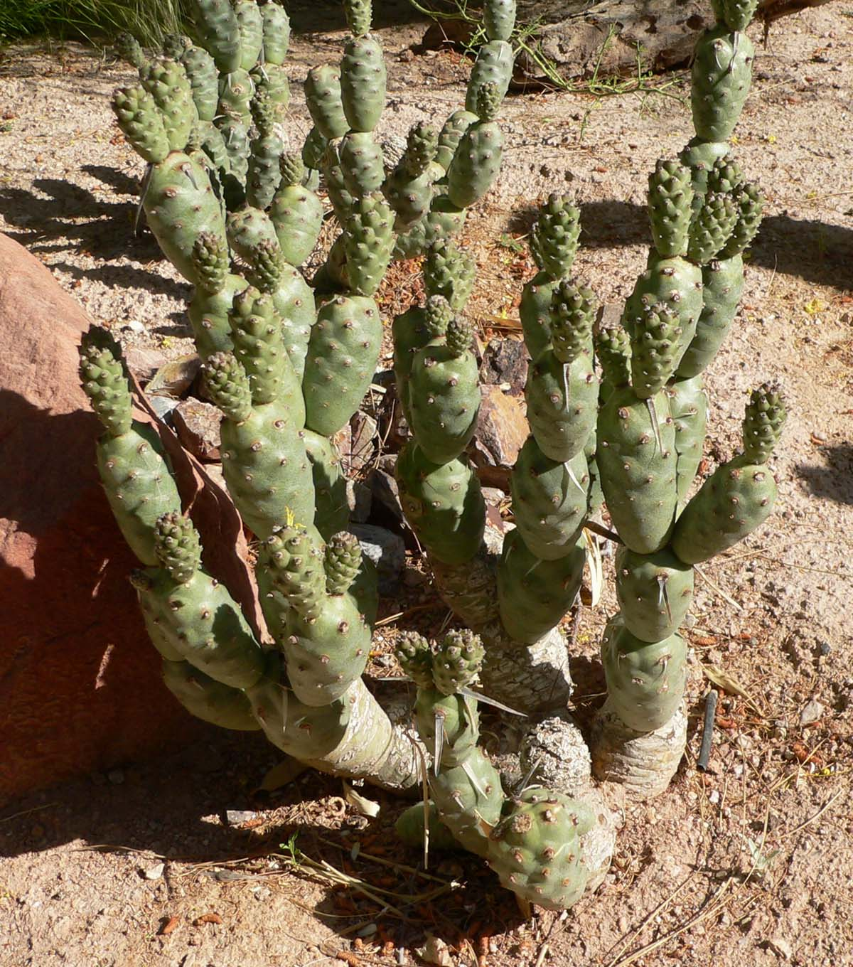 types of desert plants - cactus