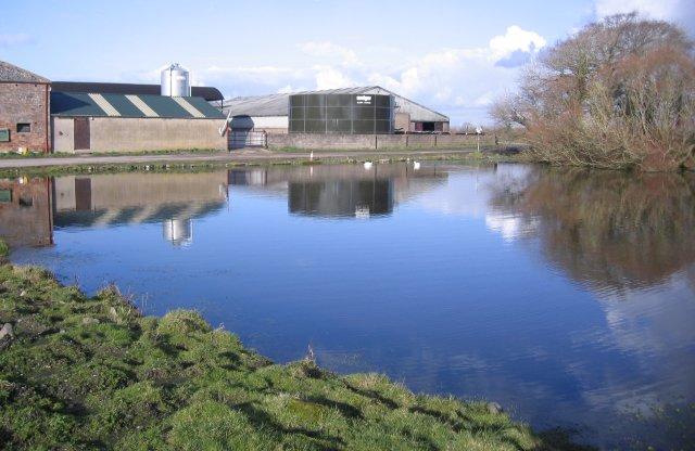 The Swan Pond at Salt Cotes - geograph.org.uk - 124606