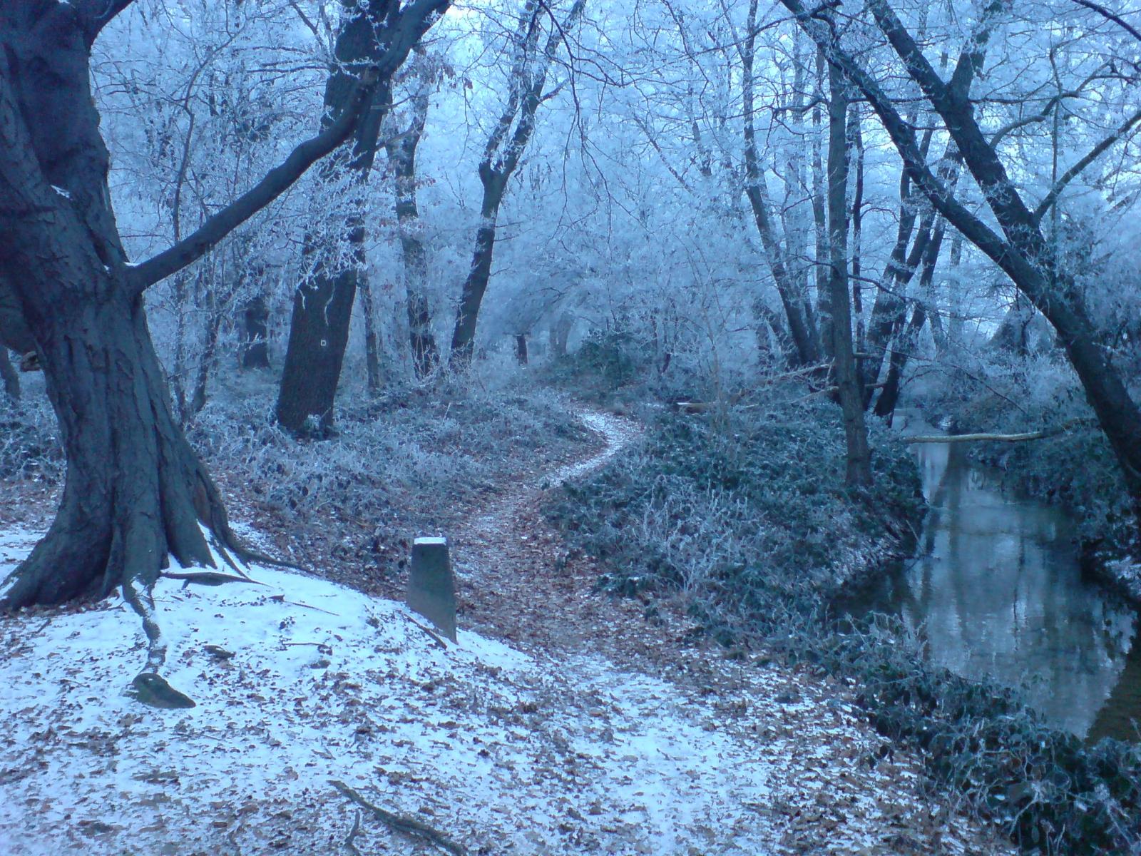 File Winter Forest Near Erzhausen Ii Jpg