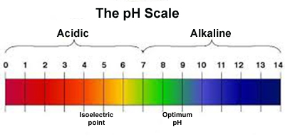 Image result for ph scale