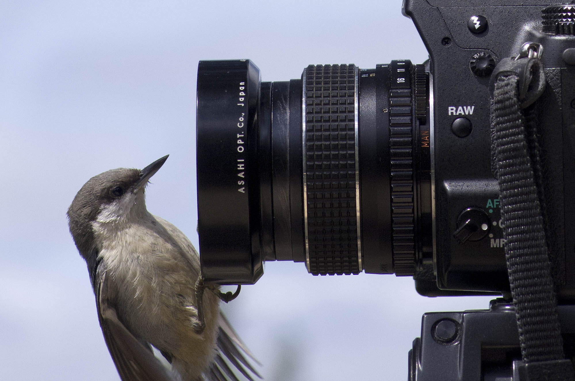 File:Bird sitting on camera.jpg - Wikimedia Commons