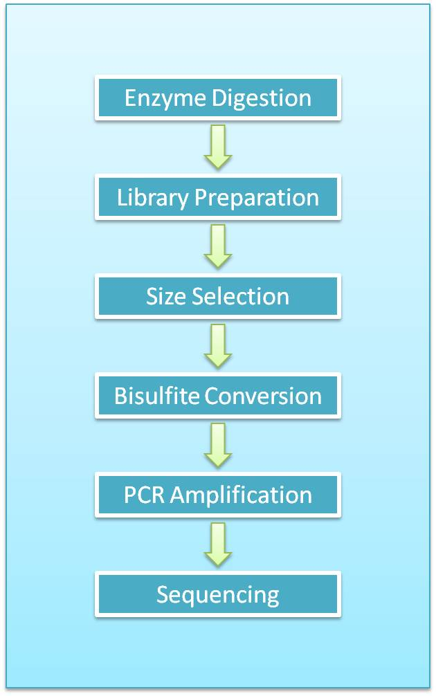 Reduced Representation Bisulfite Sequencing