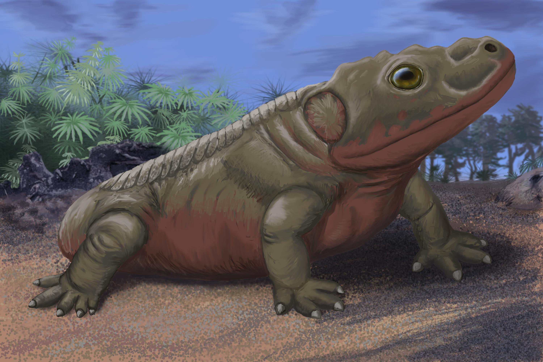 Depiction of Broiliellus