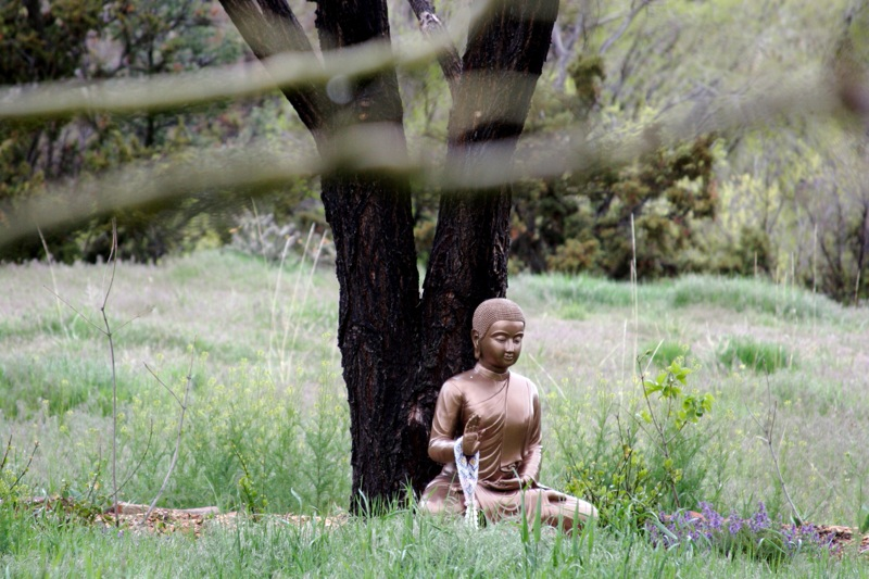 http://upload.wikimedia.org/wikipedia/commons/9/93/Buddha_statue_on_Upaya_Zen_Center_grounds.jpg