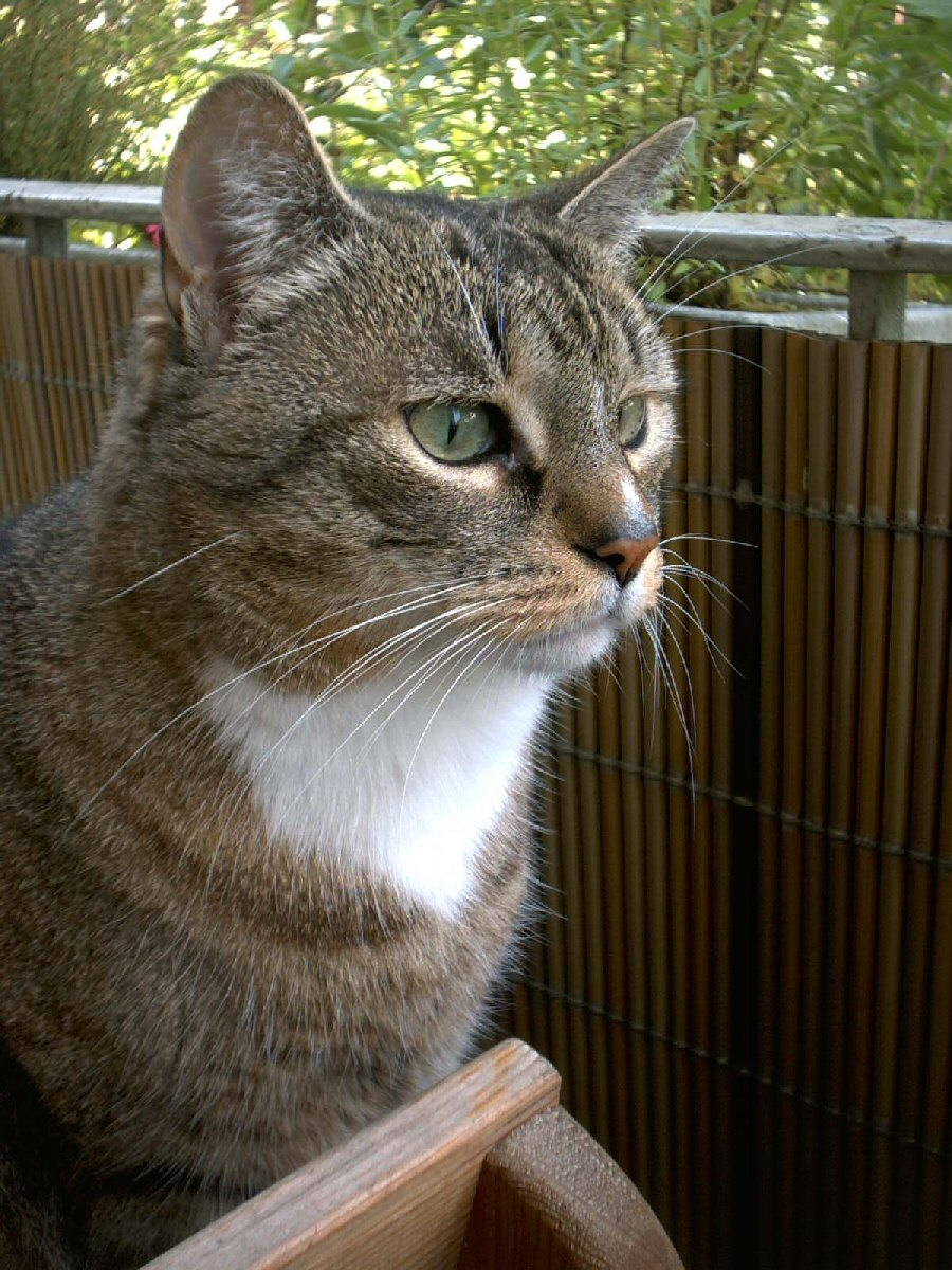 kissa – Wikisanakirja