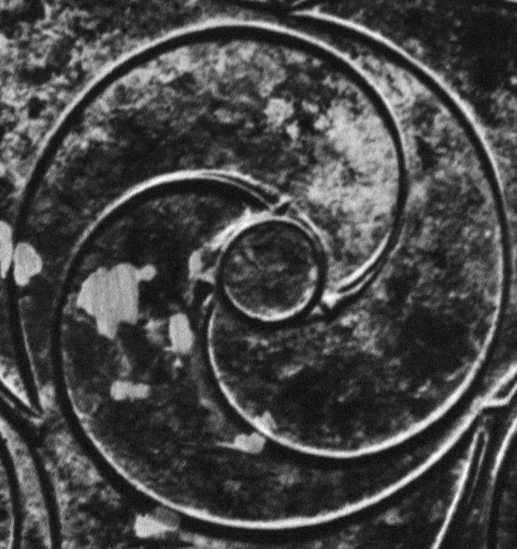 Celtic yin yang whorl in a triskele arrangement