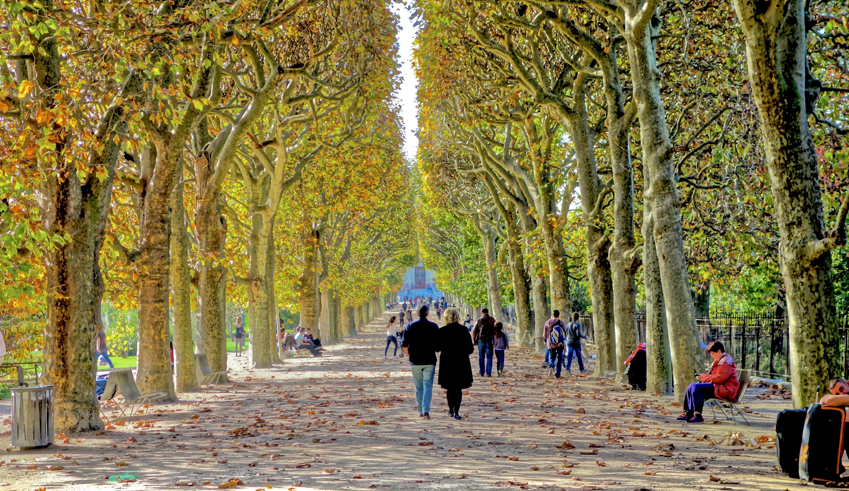 File couloir de l 39 automne jardin des plantes de paris - Jardin des plantes paris ...