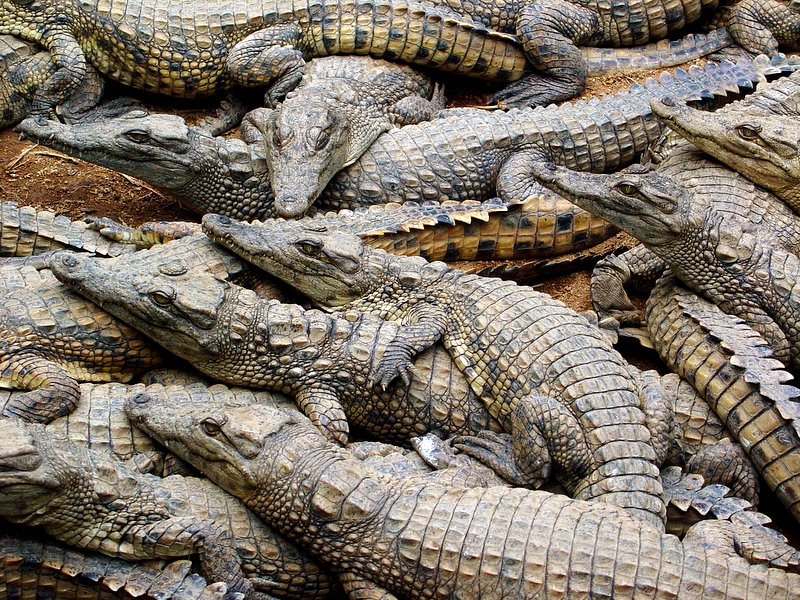 Build Croc De L Enfer Saison