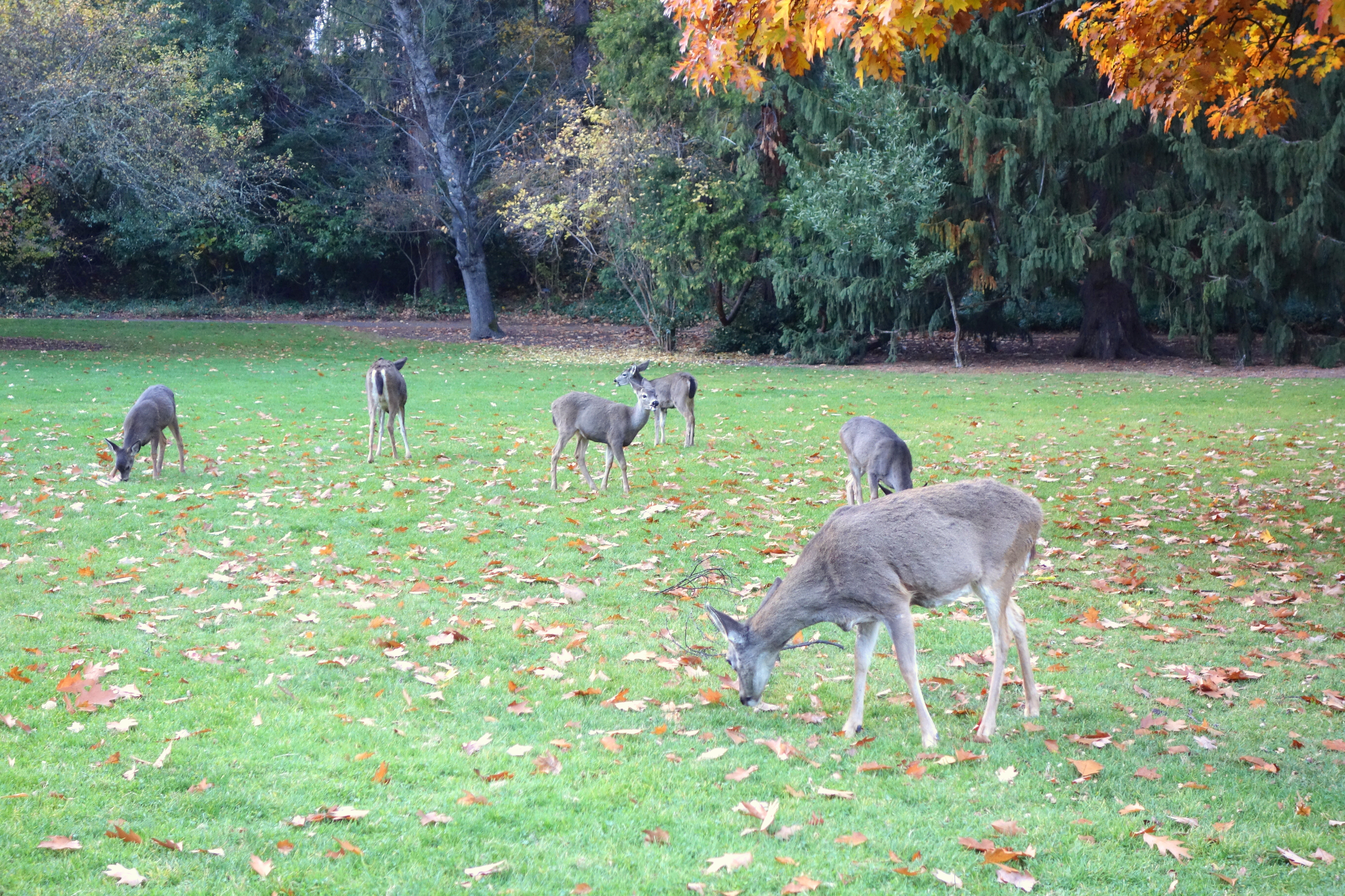Ashland Lithia Park Dogs