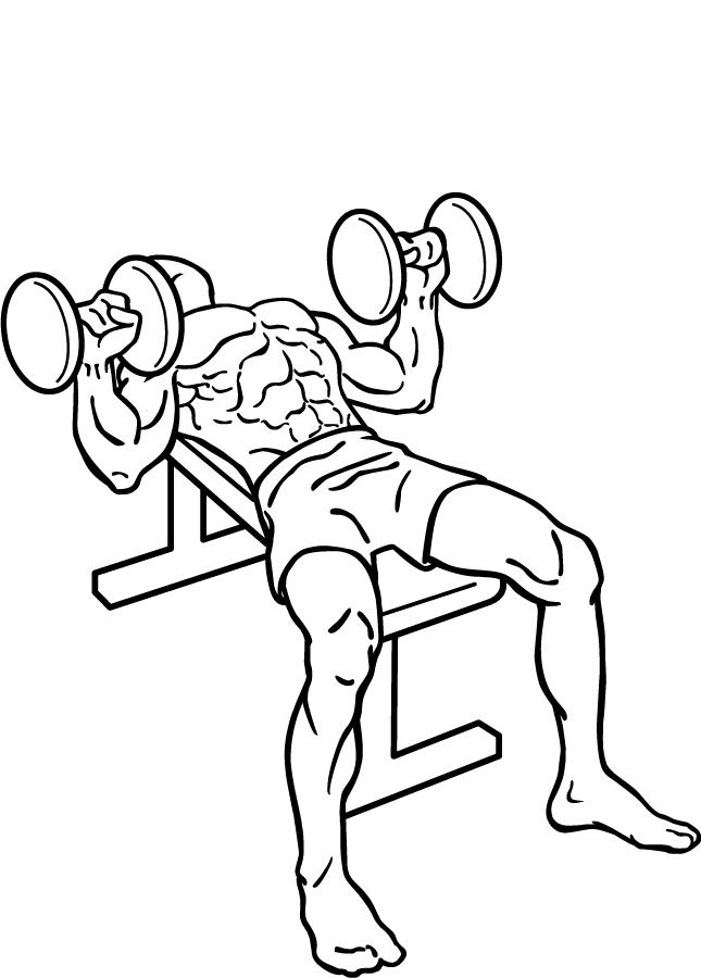ファイル:Dumbbell-bench-press-2.png