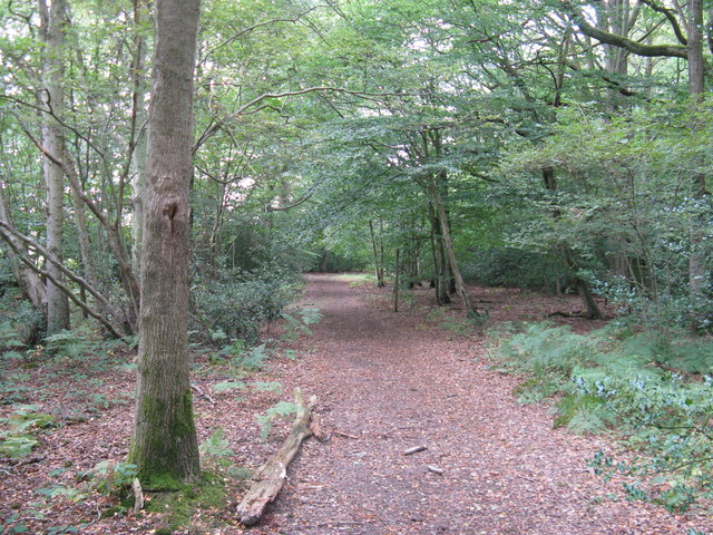 Footpath through the southern edge of Ebernoe Common - geograph.org.uk - 1479032