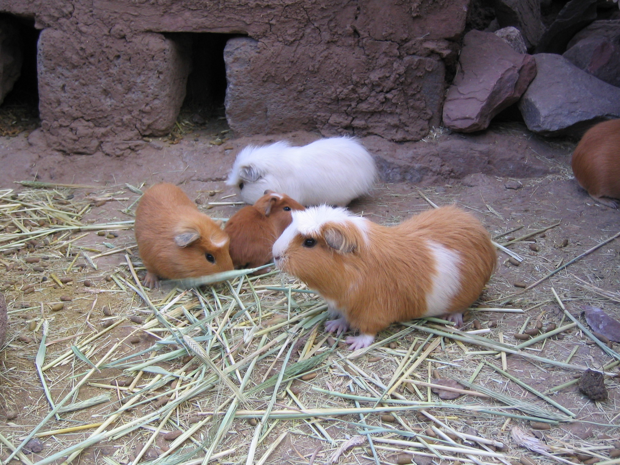 Image Result For Can Hamsters Get
