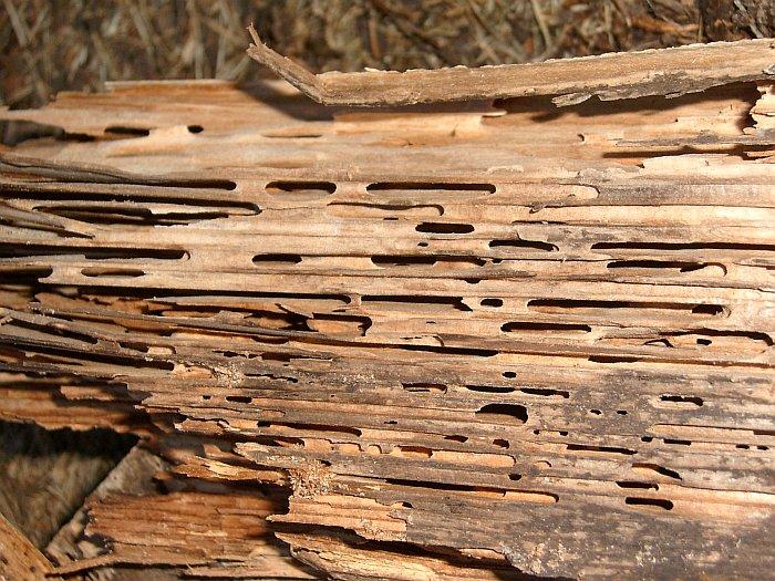 Datei:Holzschaden.jpg