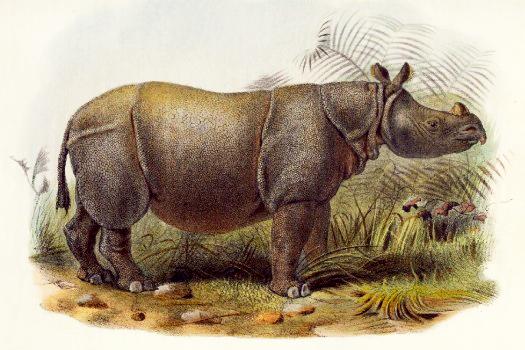 rinoceronte de java en peligro