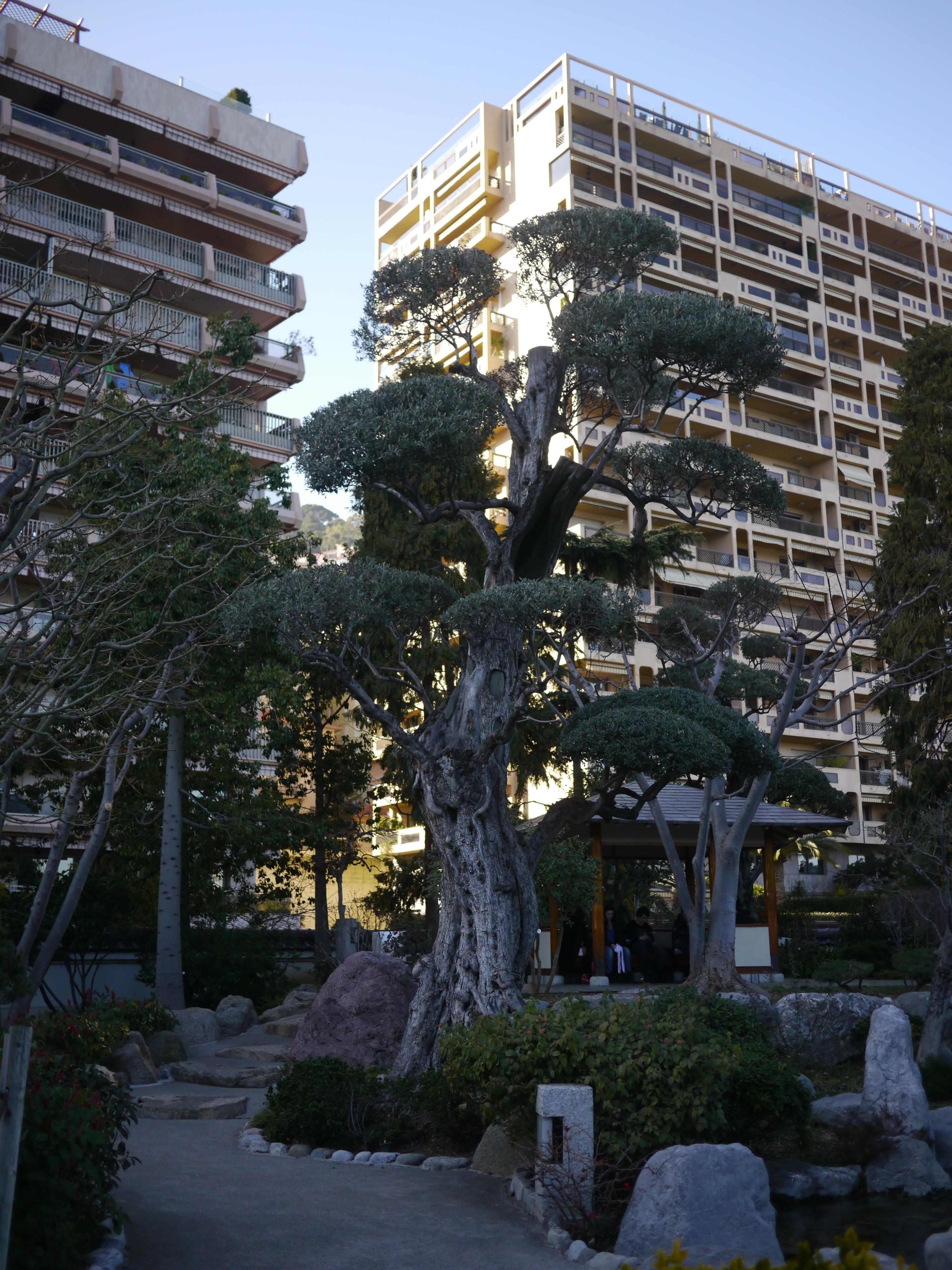 File jardin japonais monaco wikimedia for Jardin japonais monaco