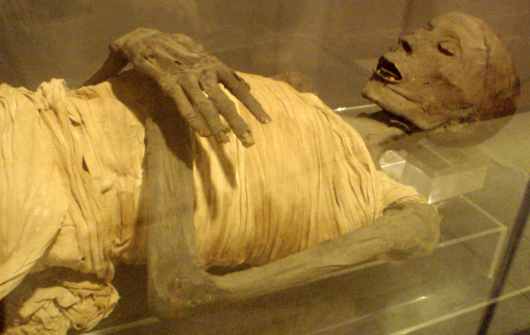 Mummy of an Upper-class Egyptian male from the...