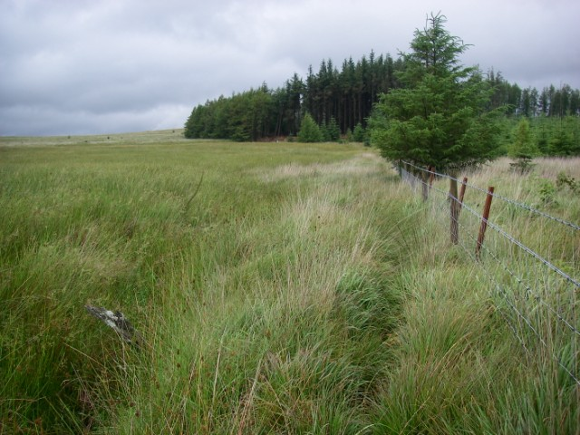 On the edge of Coed Taf Fawr - geograph.org.uk - 911579