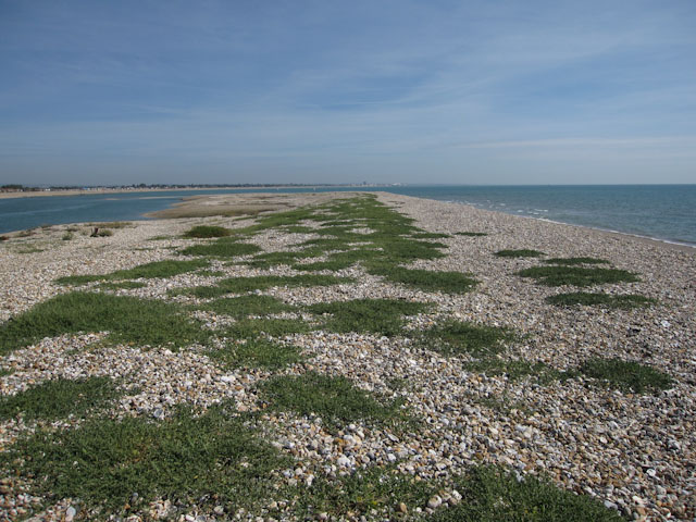 Pagham Harbour mouth - geograph.org.uk - 1458230