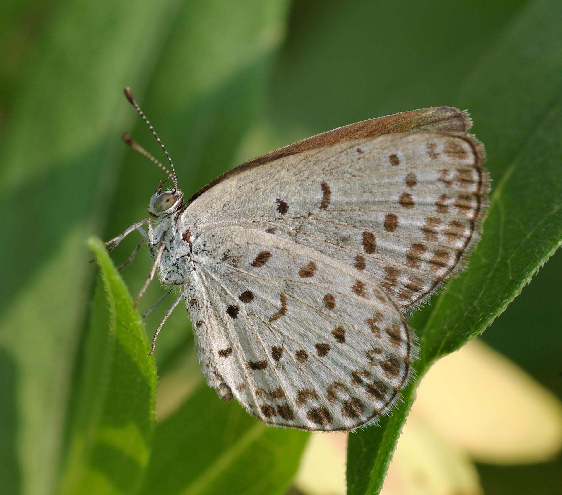 Las mariposas que comen plantas contaminadas por Fukushima mueren ...