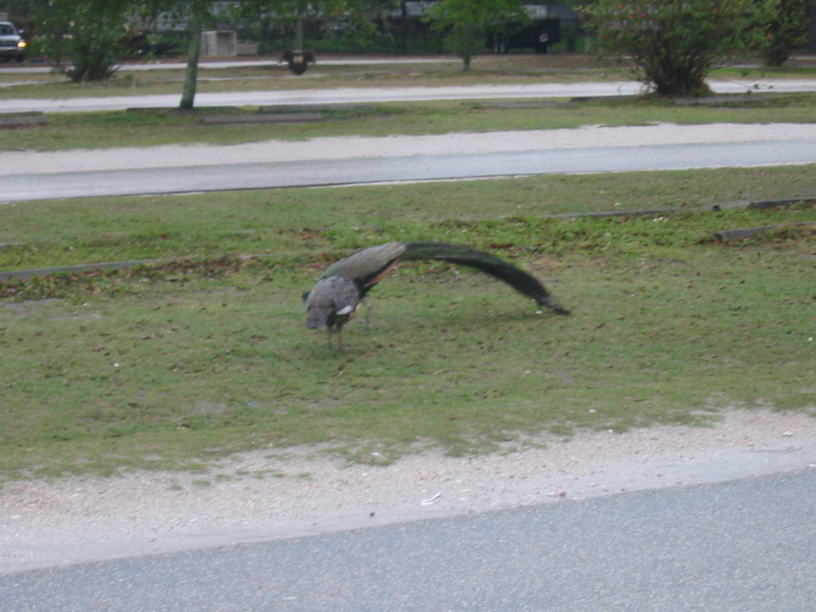 Https Www Floridastateparks Org Park Little Talbot Island