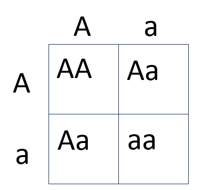 filepunnett square genetic carrierspng wikimedia commons