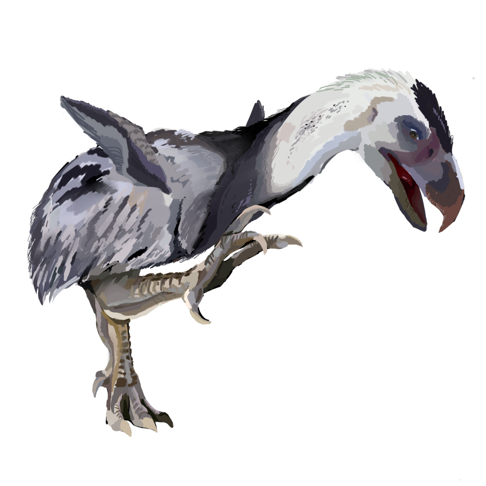 File:Reconstruction drawing of Titanis walleri.png - Wikimedia Commons