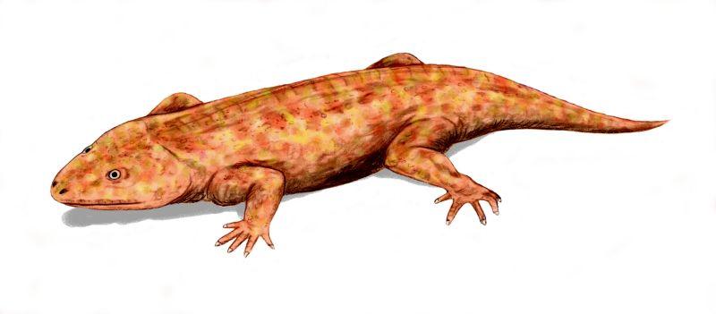 Depiction of Reptiliomorpha
