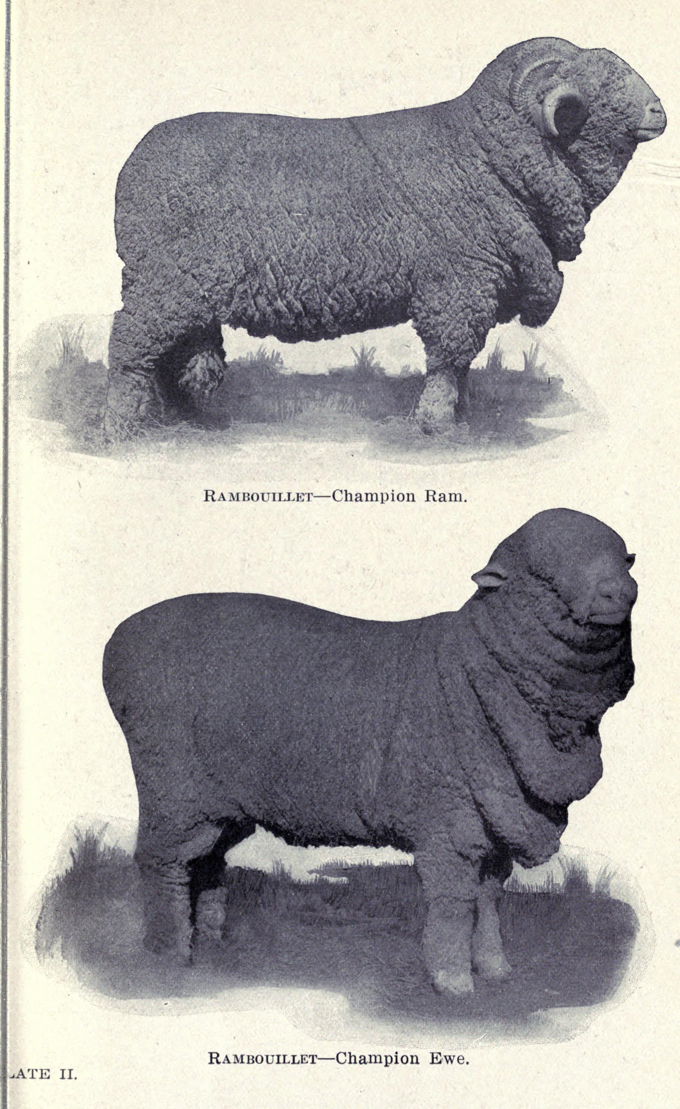 File:Sheep diseases (Page 21) BHL17869871 jpg - Wikimedia