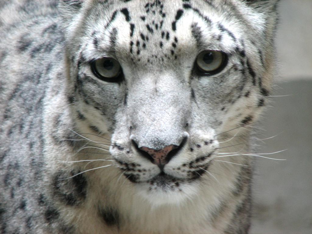 Free Pics Of Wild Cats