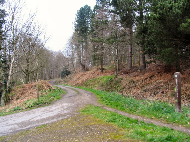 Wharncliffe Woods - geograph.org.uk - 156618