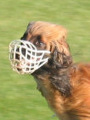 Afghanen Coursing muzzle.jpg