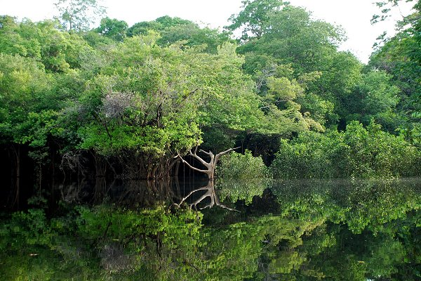 Brazil Amazonie