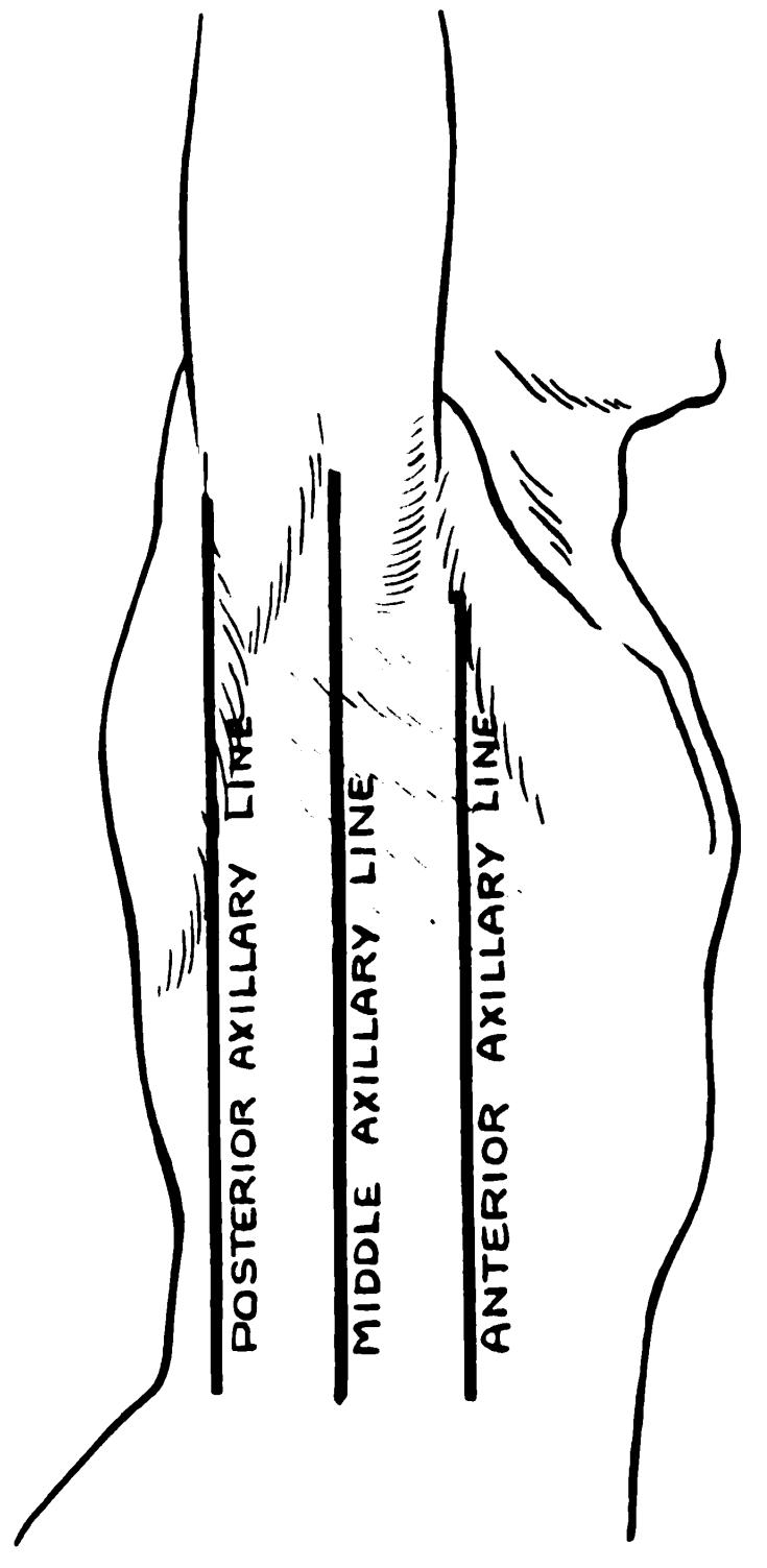 Axillary Lines Wikipedia