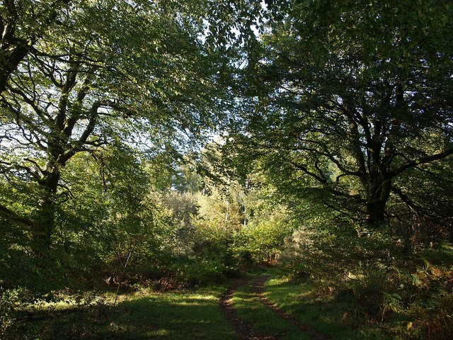 Bridleway in Clampitt Plantation - geograph.org.uk - 580190