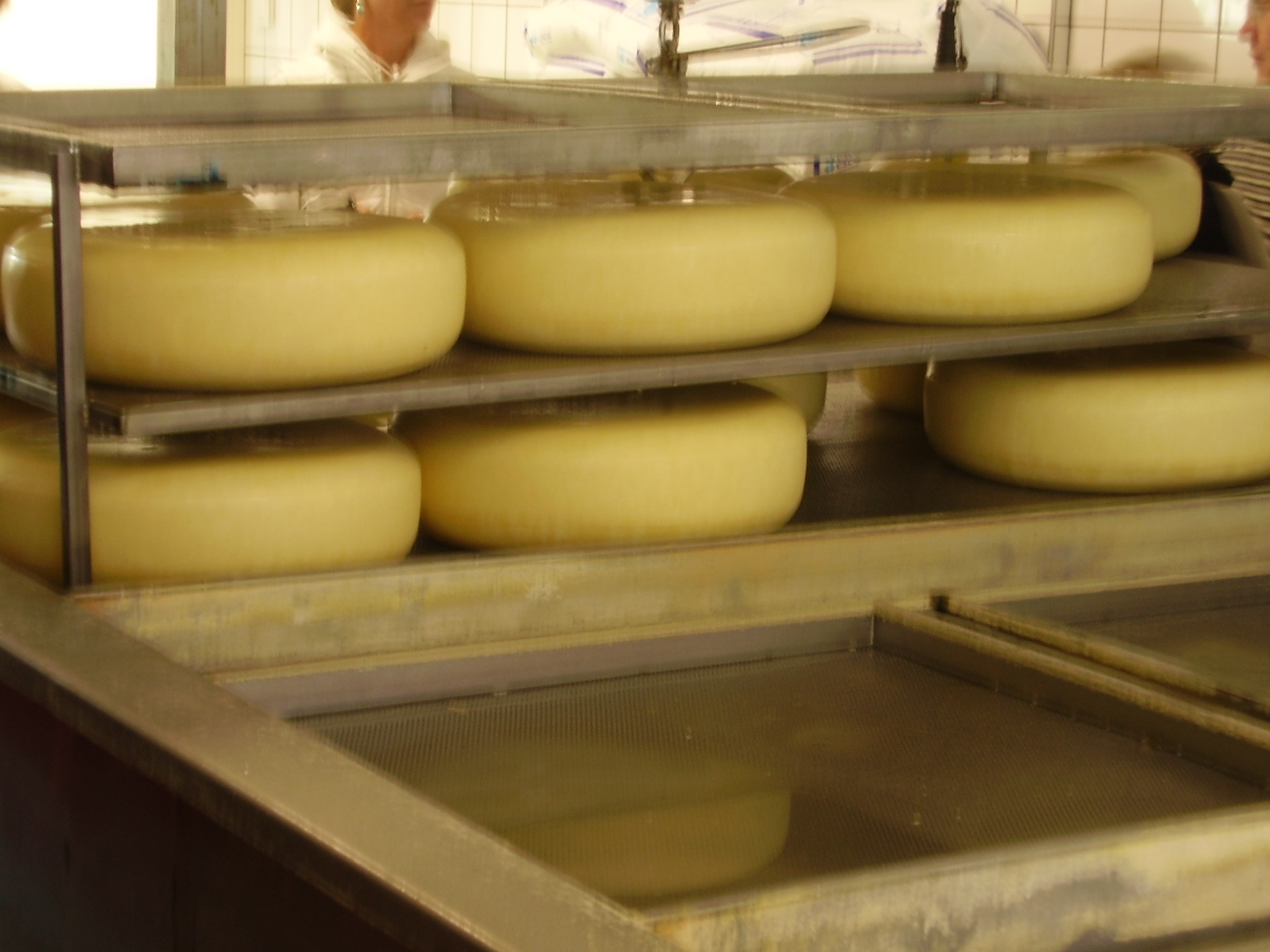 File:Chesse gouda immersion.JPG - Wikimedia Commons
