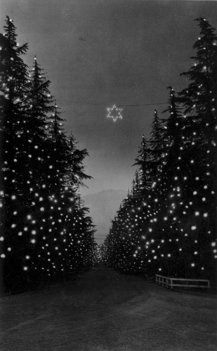 filechristmas tree lane altadena w987jpg