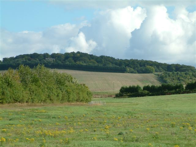 Ewelme Downs - geograph.org.uk - 54424