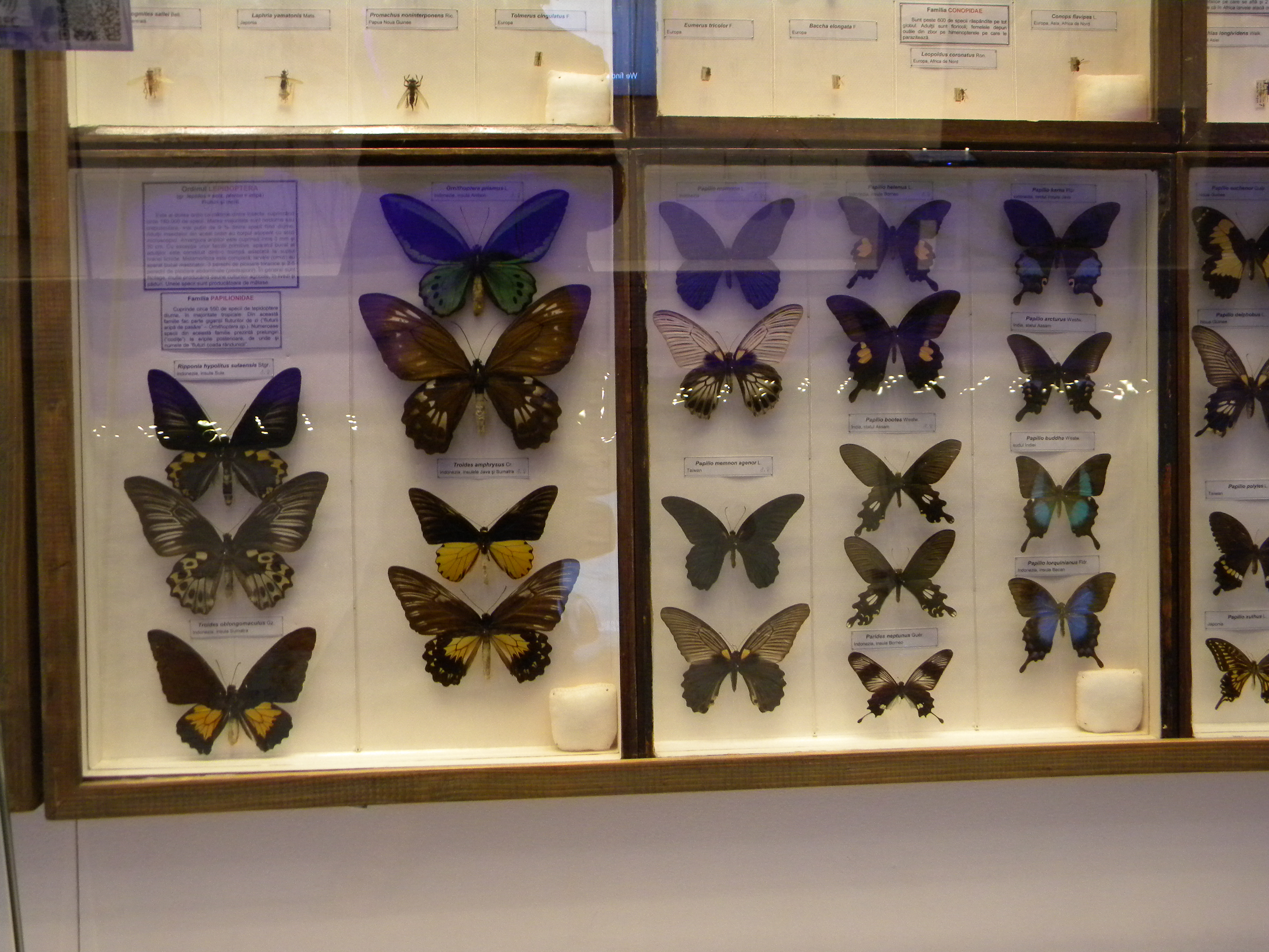 Superieur File:Grigore Antipa National Museum Of Natural History, Romania, Bucharest.  A Collection
