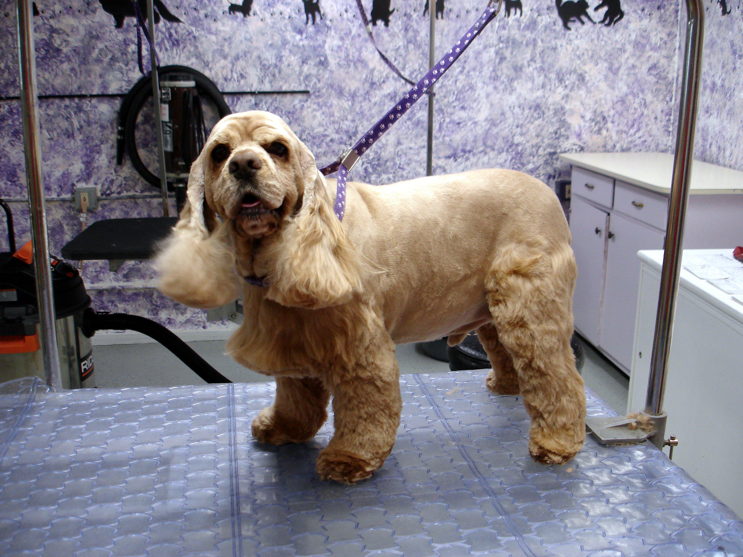 American Dog Grooming School Okc