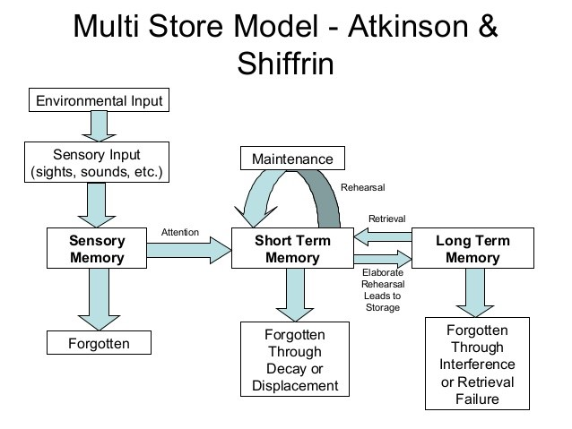 Atkinson & Shiffrin Memory Model. Created by Dkahng and available on Wikimedia Commons under a CC-BY, Share Alike license.
