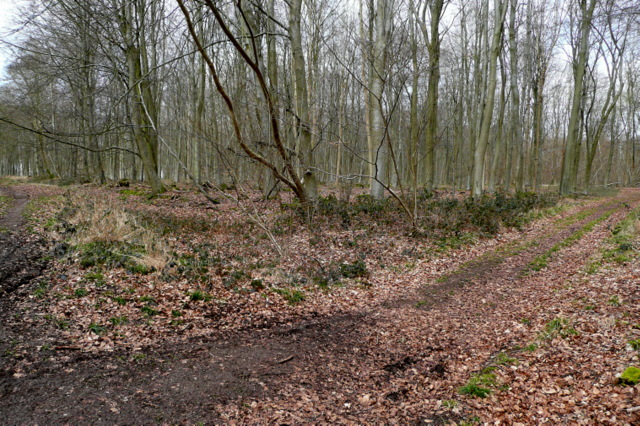 Junction in Black Wood - geograph.org.uk - 1772419