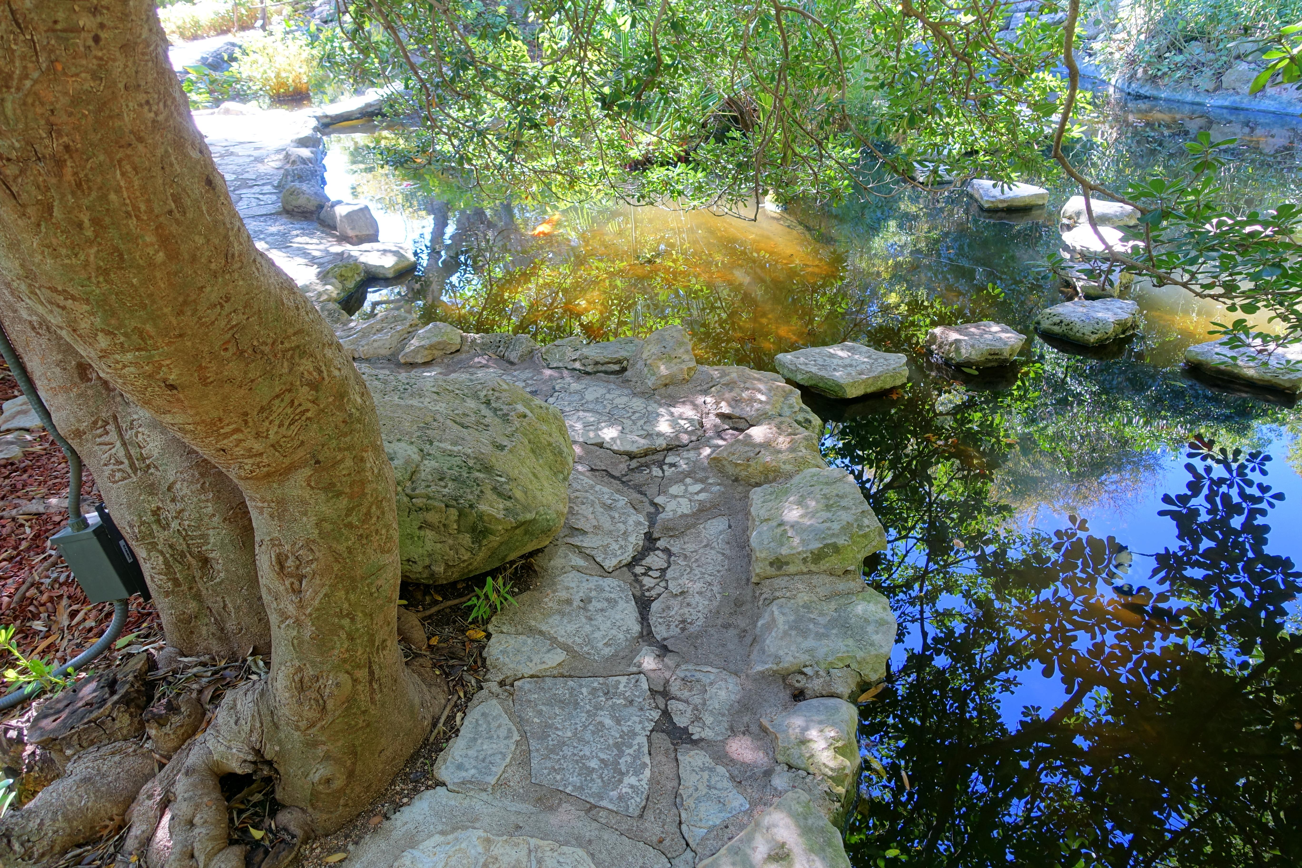 File:Koi Pond   Isamu Taniguchi Japanese Garden   Zilker Botanical Garden    Austin,