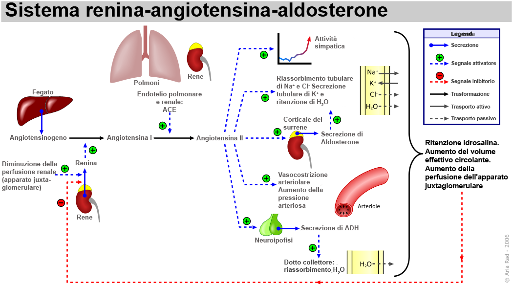 Aldosterone And Arterial Hypertension Nature Review